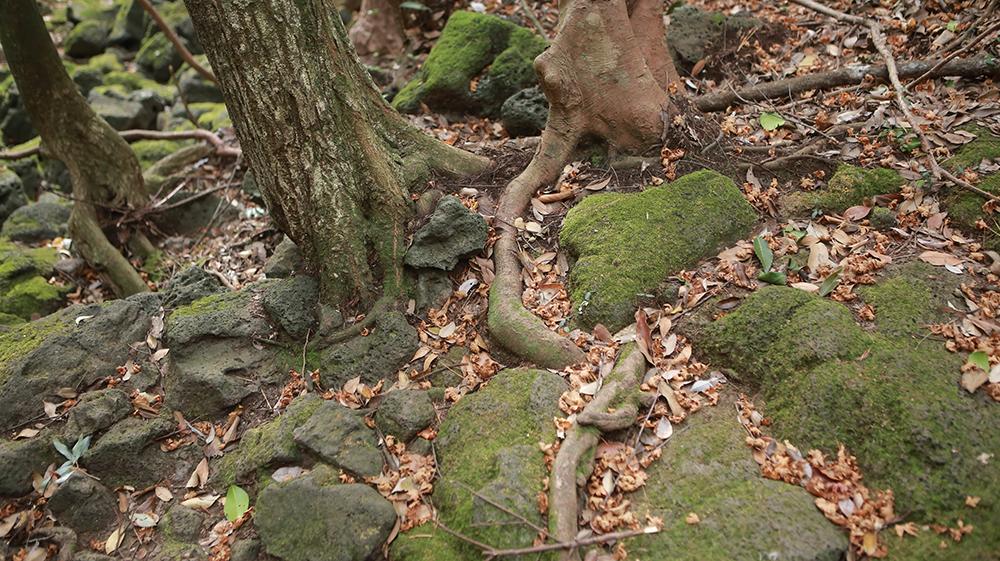 고살리숲길탐방